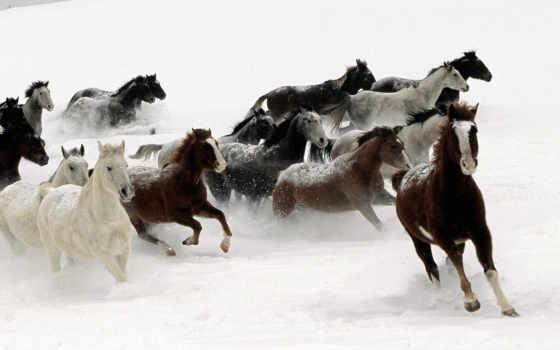 лошади, красивые, красивая
