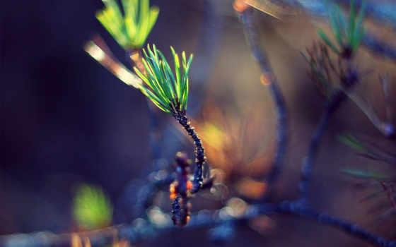 росток, green