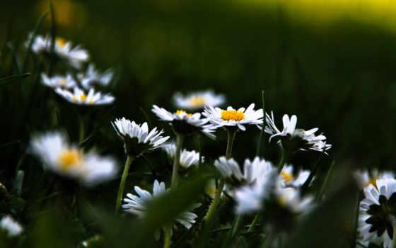 цветы, растительность, поляна