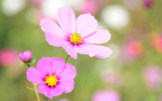 flowers, love, цветы