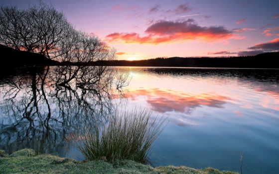 water, дерево, отражение