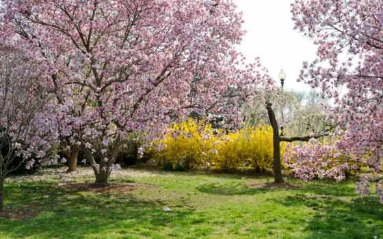 paisagem, jardim, floridas, primavera, parede, пейзажи -, весна, цветение, garden, papel, árvores,