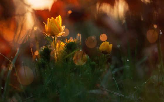 макро, природа, cvety