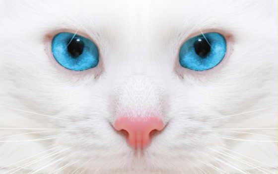 кот, white, белая