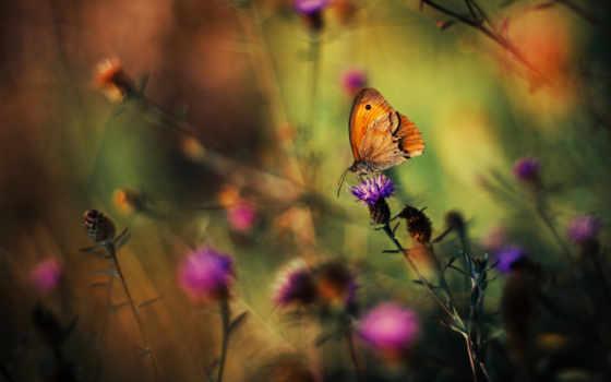 растения, cvety, трава, бабочка,
