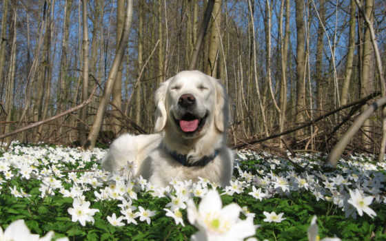 природа, весна, собака