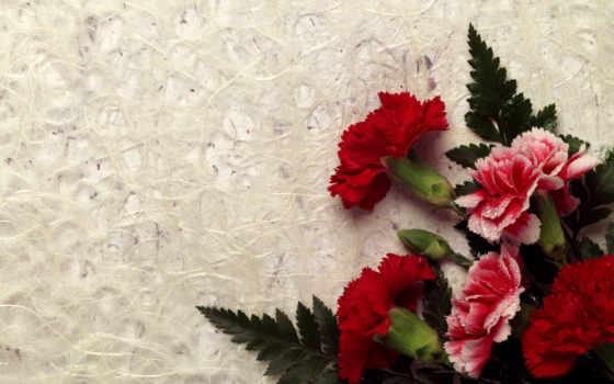 гвоздики, букет, цветы, лозунг, красные, капли, carnation,