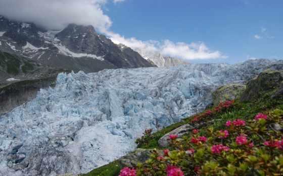 природа, цветы, горы
