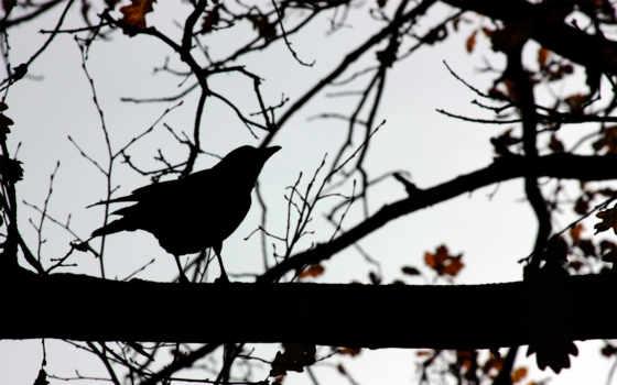 силуэт, ветви, птица, небо, birds, desktop, shadows,