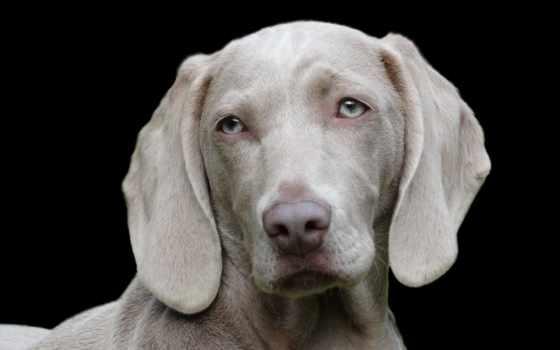 собака, images, free, комната, уфе, dogs, breeds, pixabay, еда,