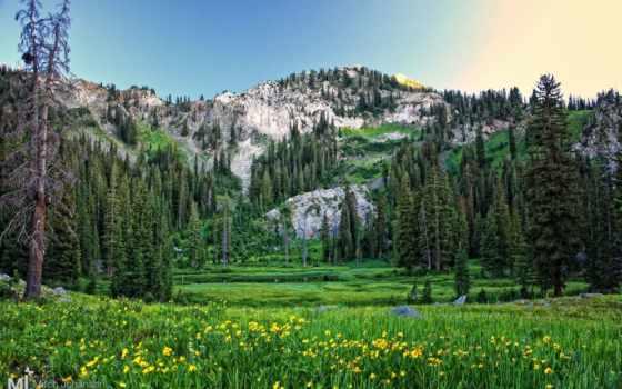 природа, горы, trees, пейзажи -, качестве, красивые, оружие, настроения, праздники, cvety,