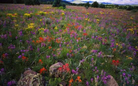 apache, national, arizona, sitgreaves, лес, white, mountains,