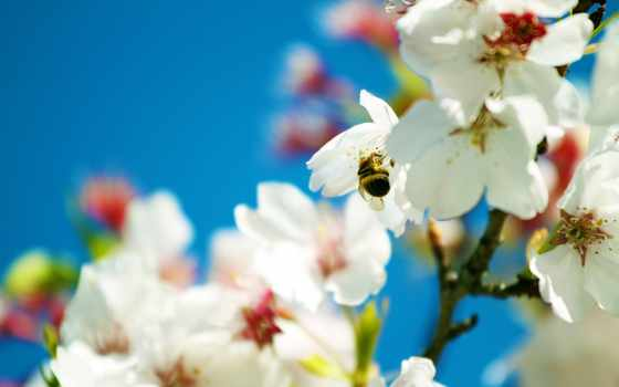 весна, widescreen, desktop, free, flowers, high,