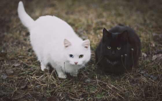 кот, black, cute, love, animal, white, see, funny, коты