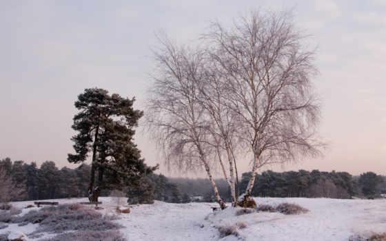 деревья, пейзаж