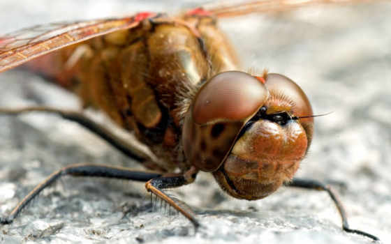 глаза, насекомое