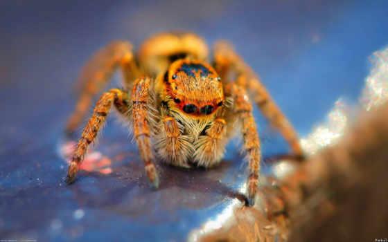 spider, глазок