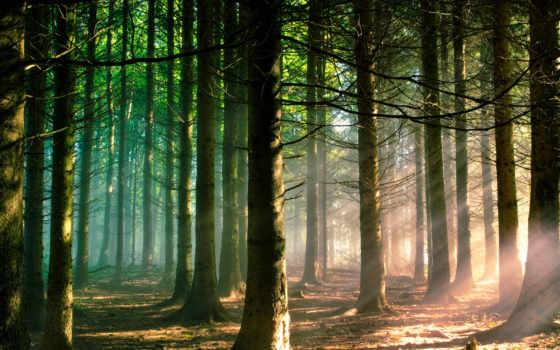 лес, природа Фон № 31955 разрешение 1920x1080
