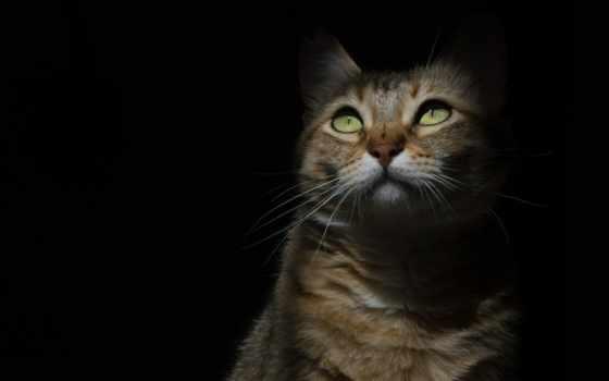 животные, кот, категории