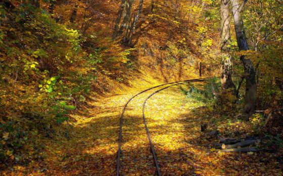 природа, осень, листья, дорога, деревья, лес, красивые, рельсы,