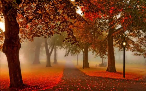 осень, park, природа