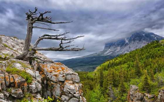 mountains, дерево, trees, clouds, growing, лес, природа, rock,