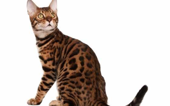 котов, пыль, полу, летит, свободное, топота, белом, fone, кошечки, коты, time,