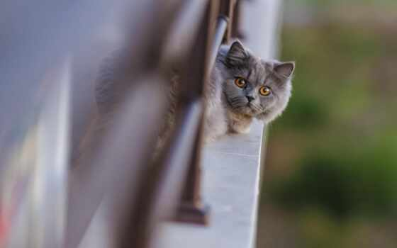 cats, природа, кошки, кот, pinterest, картинка, забор, картиники,