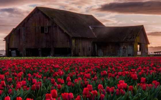 barn, природа, тюльпан, поле, landscape, more, best,