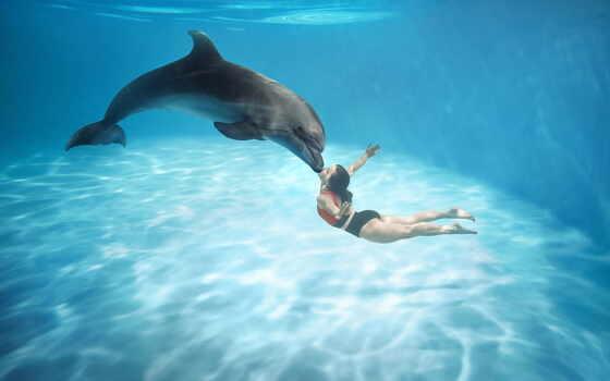 pattaya, дельфинарий, klake, ticket, ramayana, park, water, дельфин, world, аттракцион