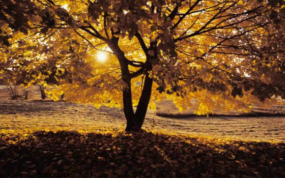 осень, телефон, планшетный