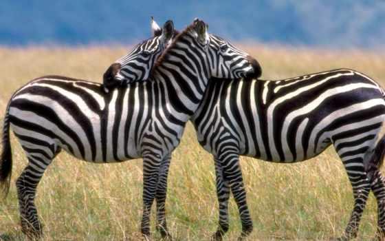 животных, всех, миру