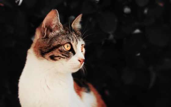 ,кот,котэ,шикарный,мордочка,