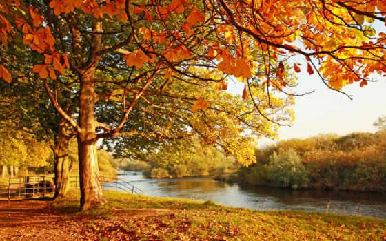 jesień, drzewa, tapety, пл, fototapety, las, woda, liście, jesienne, krajobraz,