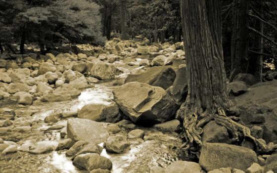 скалы, дерево, река, ствол, roots, black, white,