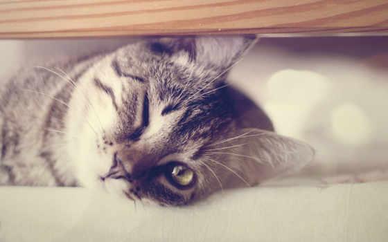 кот, вконтакте, пользователей, найти, нос, whiskers, млекопитающее, друзей, фон, skin,