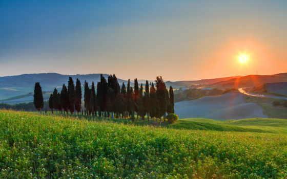 поле, картинка, landscape, дерево, утро,