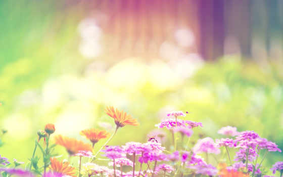 summer, природа, цветы