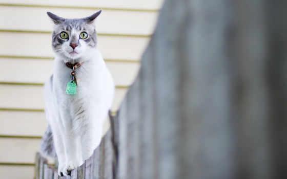 кошки, марта, широкоформатные