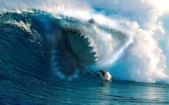 калифорнии, акулы, акула