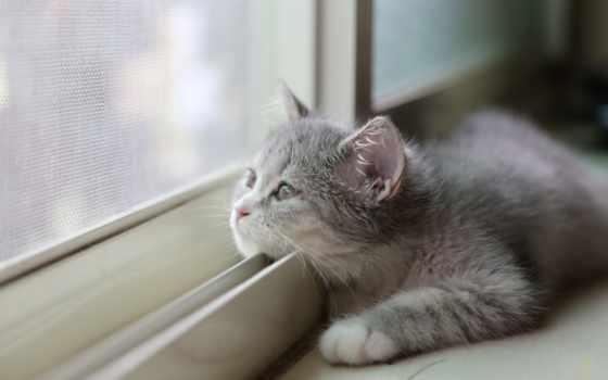 смотрит, кот, окно, котенок, серый, разных, за, разрешениях, кошки,