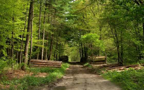 лес, красивый, пользователя, коллекция, яndex, дорога,