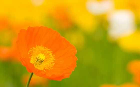 оранжевый, free, взгляд, flowers, типографика, art, einstein, albert,