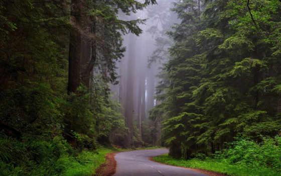 redwood, лес, дождь, park, sounds, california, national, природа,