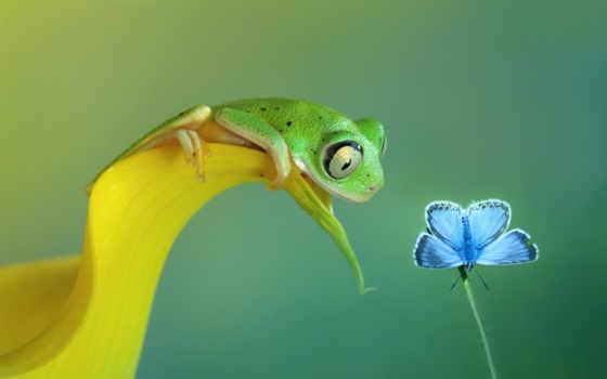 бабочка, лягушка, макро, curiosity, free,