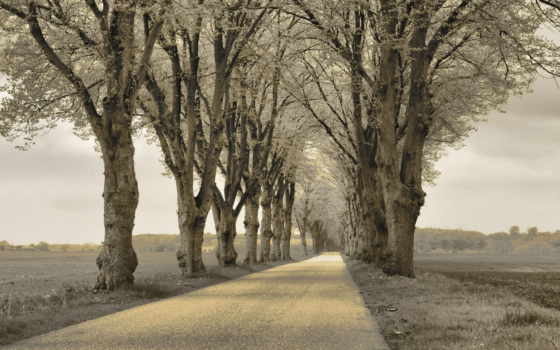 серые, небо, природа, поле, trees, you, широкоформатные, большие,
