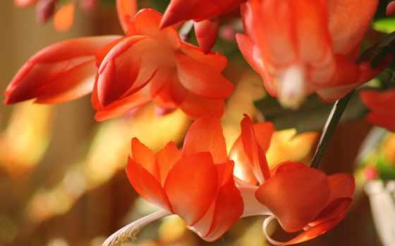 цветы, pantalla, fondos