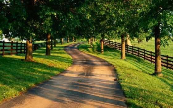 summer, природа, дорога