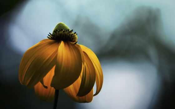 свет, hope, flowers