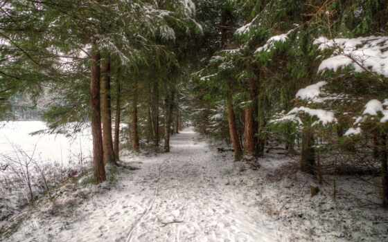 winter, trail, природа, forests, снег, лес, trees,